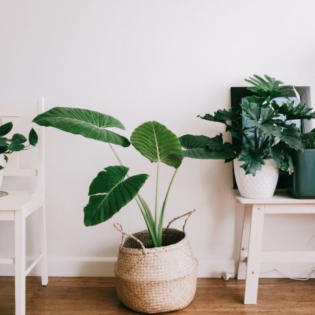 Plant and table sapce